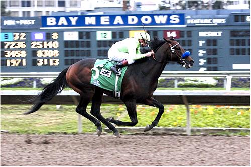 Horse and jockey racing at Bay Meadows race track in SanMateo